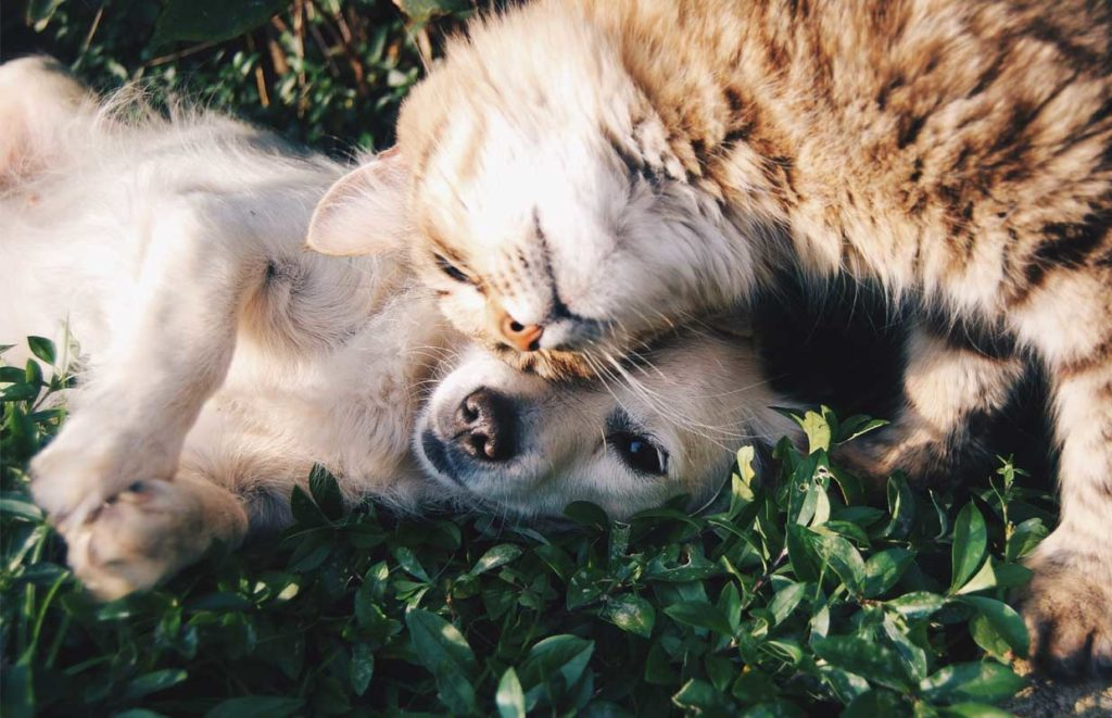 A puppy and kitty nuzzle each other as they experience a pain free life thanks to CBD's.