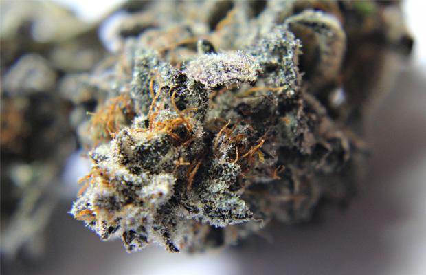 Candyland Cannabis Now Magazine