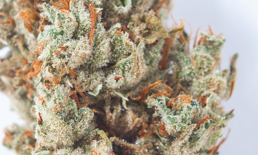 Super Lemon Haze from CRAFT cannabis Summer Solstice